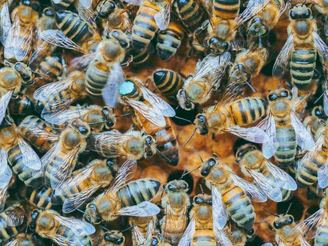 Comment éviter les piqures d'abeille et de guêpe