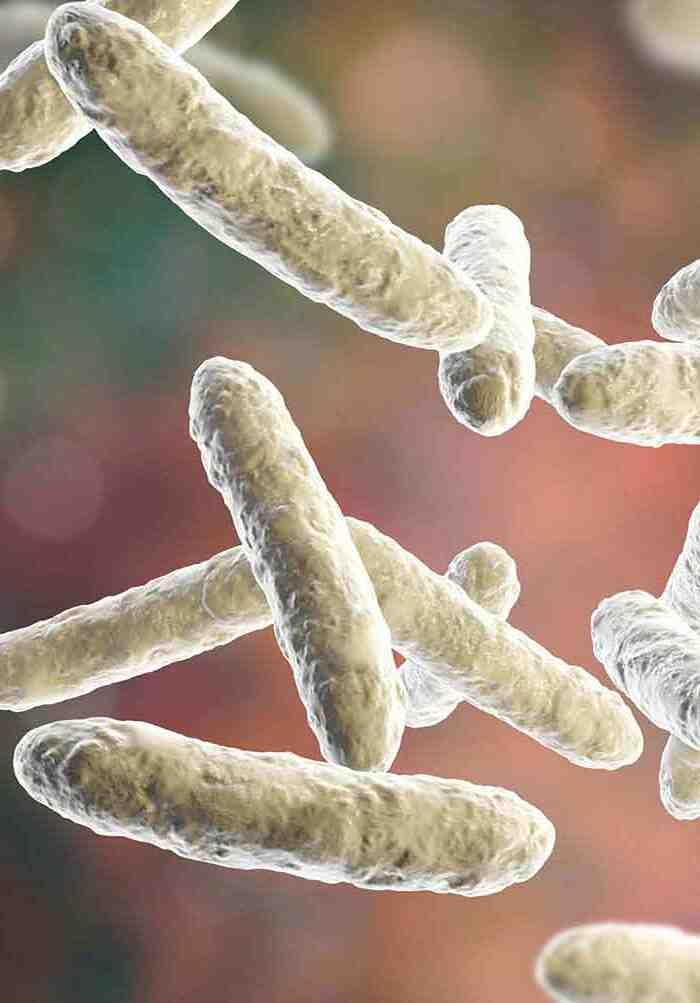 Comment prendre des lactobacilles acidophiles avec des antibiotiques